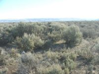 near Malheur Refuge just south of Sod House Lane